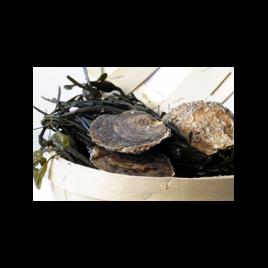 100% ZEKER ZEEUWS platte oesters – 12 stuks